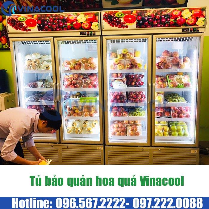 tủ trưng bày hoa quả Vinacool