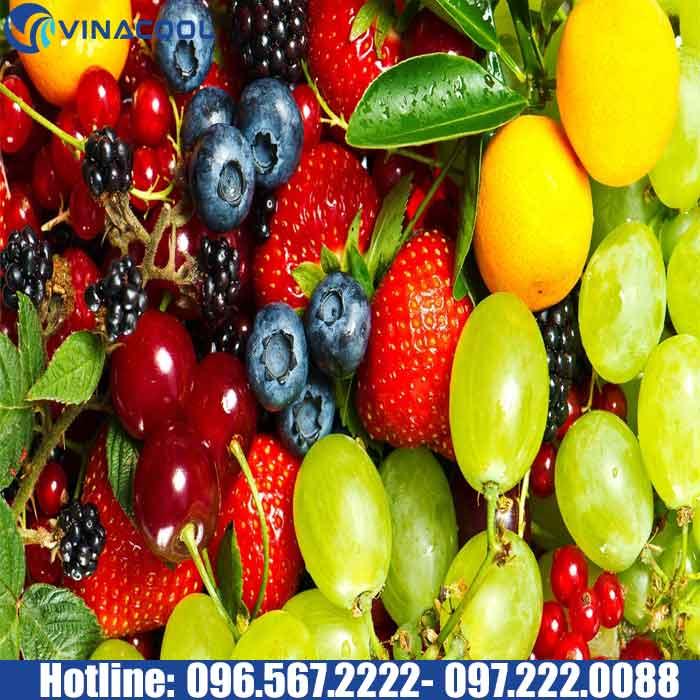 lựa chọn nguồn trái cây nhập khẩu sạch